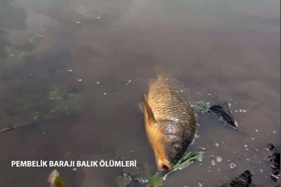 Peri Suyu barajında yaşanan balık ölümleri endişe yarattı
