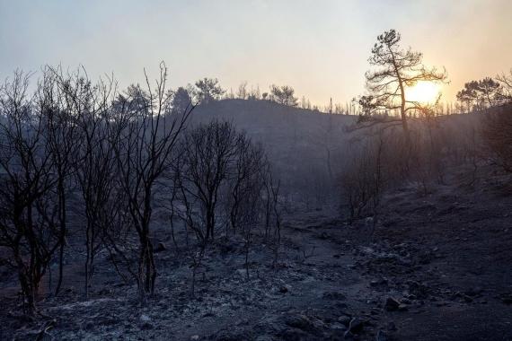 İzmir'deki orman yangını ile ilgili Meclis araştırması istendi
