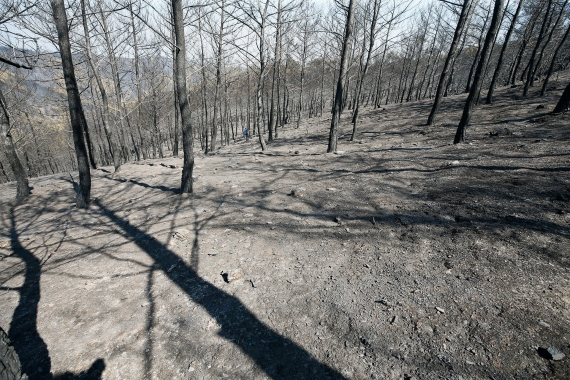 İzmir'deki yangında Karşıyaka büyüklüğünde orman yandı