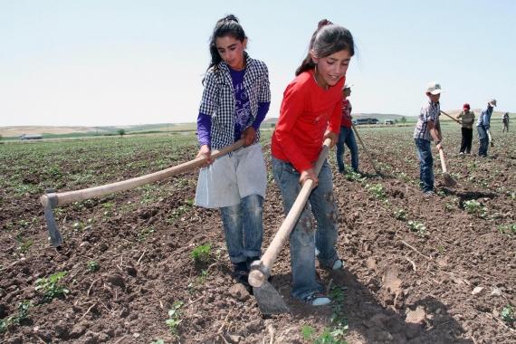 Tarlada çapa yapan çocuk işçiler