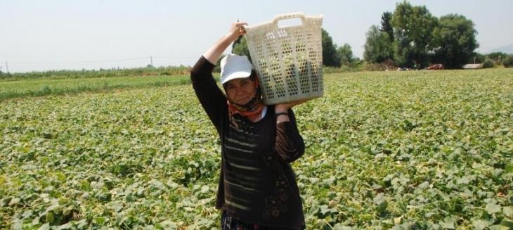 Tarım işçisi 40 derece sıcakta da tarlada