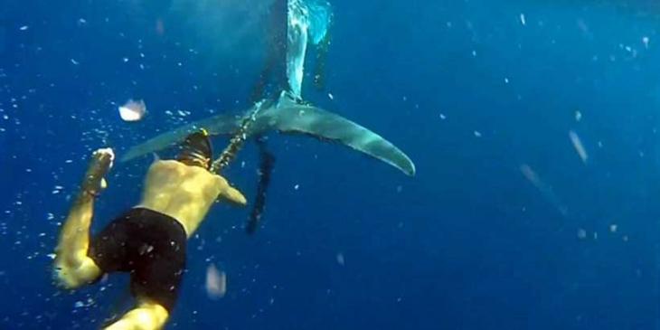 Balıkçı ağlarına dolanan yaralı balinanın kurtarılma anı görüntülendi