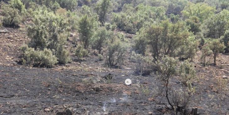 Savur'da orman yangını