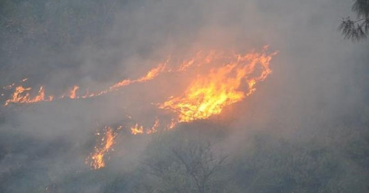 Aydın'daki orman yangını saatler sonra kontrol altına alındı
