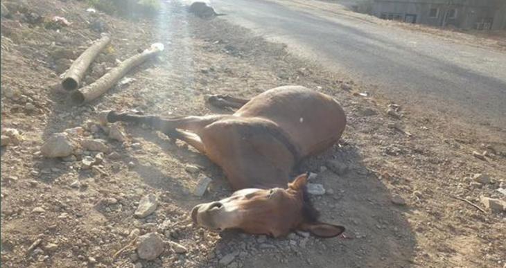 Roboski'de asker, ev ve araçları taradı, katırları katletti