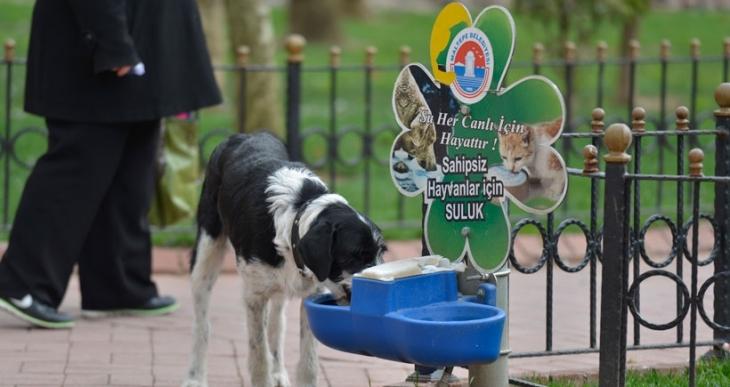 Maltepe Belediyesi, sokak hayvanları için suluk projesi başlattı