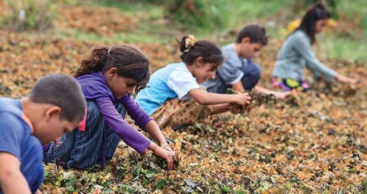 Tarım işçisi çocuklar: Sonumuzun aynı olmasından korkuyoruz