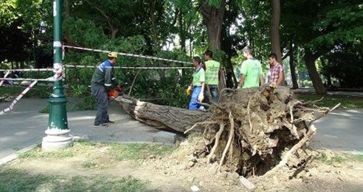 Gezi Parkı'nda devrilen ağaç kesildi