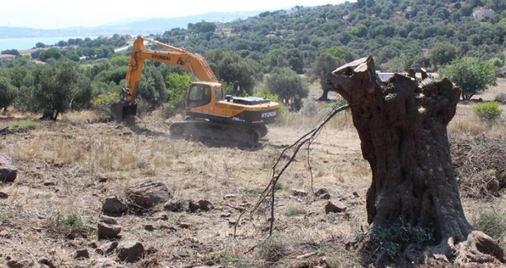 Yeni Foça'daki ağaç katliamı durduruldu