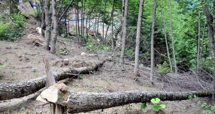 Yeşil Yol'daki ağaç katliamına tepki