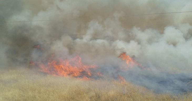 Urfa-Siverek'te orman yangını: 5 bin ağaç zarar gördü