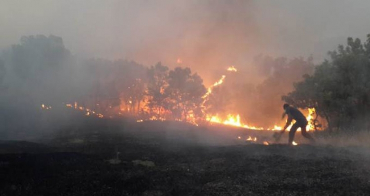 Asker, Lice'nin ormanlarını yaktı