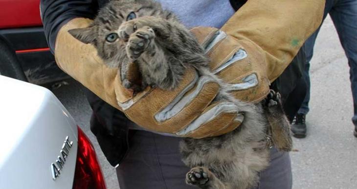 Kedilere dikkat! Kaportaya vurmadan aracınızı çalıştırmayın