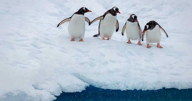 'Karda yürürken düşmemek için penguenler gibi hareket edin'