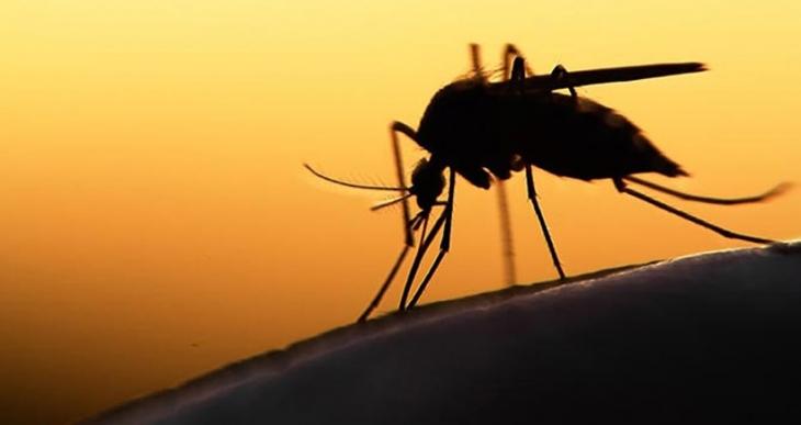 Beş soruda dünyayı sarsan Zika virüsü
