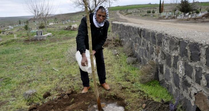 Evinin önünde bulunan ağacı kesti, ceza olarak 30 fidan dikti