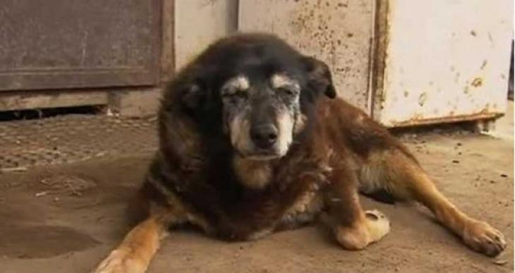 Dünyanın en yaşlı köpeği Maggie 30 yaşında öldü