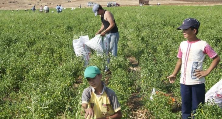 Türkiye, Suriyeli çocuk işçi  cehennemine dönüştü