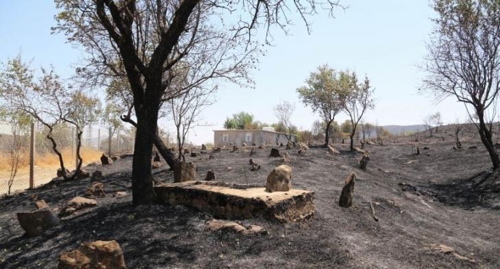 Lice'de yaşam alanları yok edildi