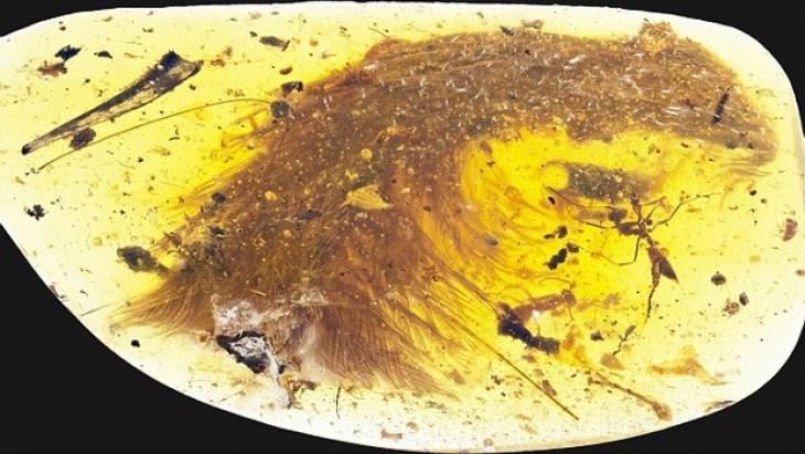 Kehribar taşında 99 milyon yıllık dinozor kuyruğu bulundu