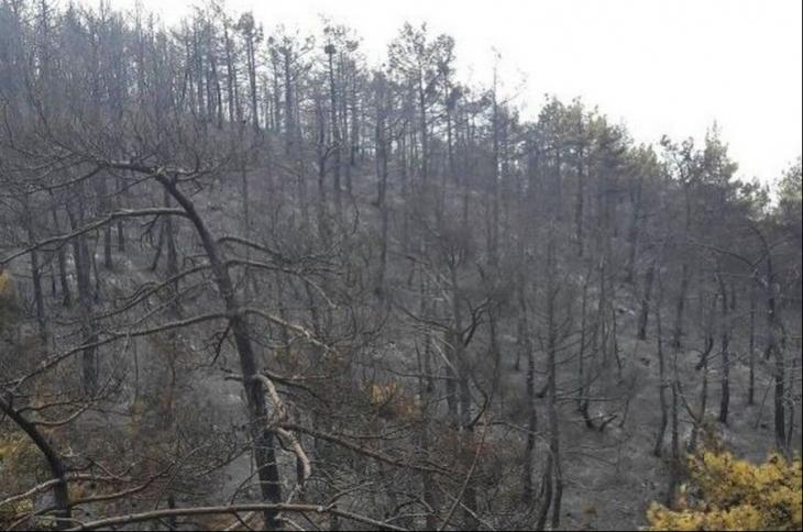 Çorum'daki orman yangını söndürüldü