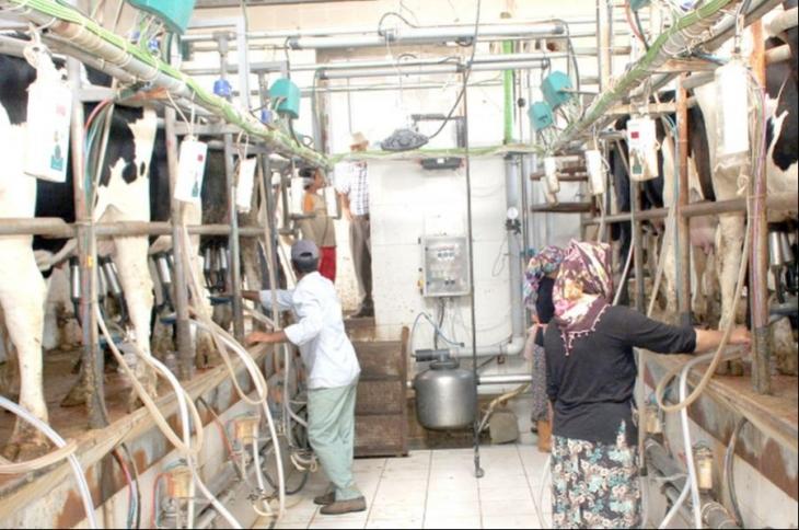 Sütte üretici fiyatı, üretimi desteklemiyor