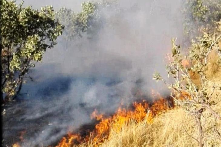 Mardin'de 20 hektar orman alanı yandı
