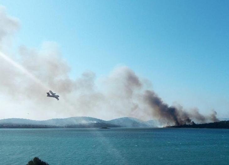 Orman Genel Müdürlüğü: Ayvalık'ta yanan alana ağaç dikilecek