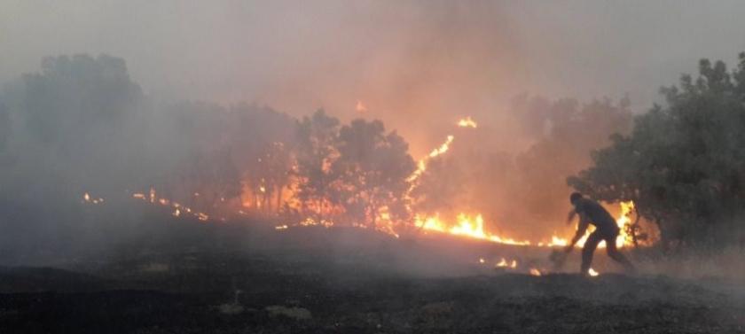 O yanan ağaç bizim ağacımız