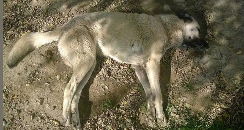 Elazığ'da hayvan katliamı