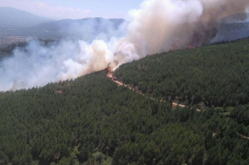 Karacasu'daki orman yangını kontrol altına alındı