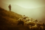 Çoban yağmuru