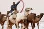 Suudi Arabistan'da botokslu develer yarışmadan ihraç edildi!