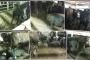 Brezilya'dan ithal edilen hayvanlara gemilerde eziyet