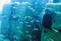 Kızıldeniz'den Akdeniz'e geçen 61 balık türü tespit edildi
