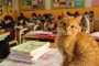 Öğrencilerin sevgilisi 'Tombi', sınıfa geri dönüyor