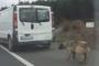 Köpeği, iple kamyonetin arkasına bağlayıp, sürükledi