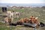 Edirne'de kayıp 500 köpek aranıyor