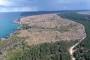 Sinop'ta nükleer santral için kesilen ağaç sayısı 650 bini aştı