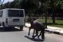 Manisa'da atın minibüsün arkasına bağlanarak koşturulması tepki çekti