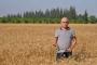 Ziraat Mühendisleri Odası: Nüfus arttı, buğday üretimi geriledi