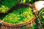 Gıda-İş: ÇAYKUR zarar ettirilerek özelleştirmeye gerekçe oluşturuluyor