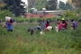 Mevsimlik tarım işçilerinin mevsimlik 'göçü' başladı