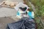 Sakarya'da 5 yavru köpek ölü bulundu