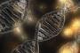 Bilim insanları Loch Ness Gölü'nde çevresel DNA taraması yapıyor
