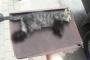 Bursa'da 4 ayağı kesilmiş yavru kedi ölü bulundu