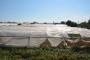 Çiftçiler iflasla karşı karşıya: Artık dayanamıyoruz