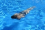 Kimya mühendisleri uyarıyor: Yüzme havuzları tehlike saçıyor