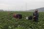 Mevsimlik işçiler koşulların iyileştirilmesini istiyor