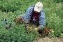 Ağbaba: Mevsimlik tarım işçiler sigortasız, örgütsüz, yoksul…